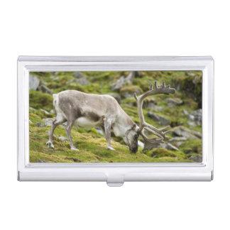 Svalbard reindeer  2 business card holder