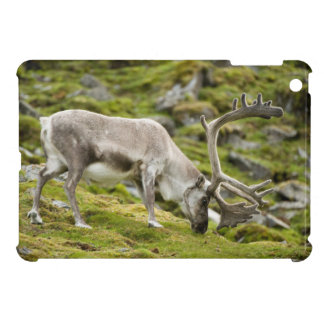 Svalbard reindeer  2 iPad mini case