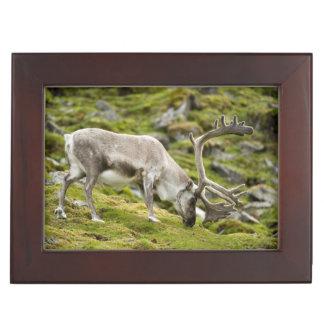 Svalbard reindeer  2 keepsake box