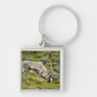 Svalbard reindeer  2 key ring