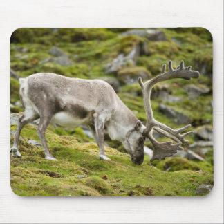 Svalbard reindeer  2 mouse mat