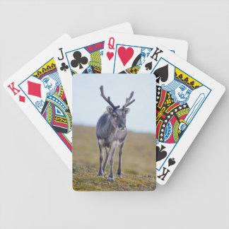 Svalbard reindeer bicycle playing cards