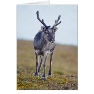 Svalbard reindeer card