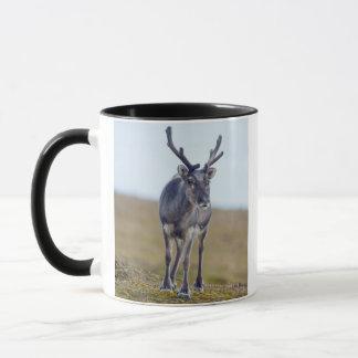 Svalbard reindeer mug