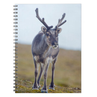 Svalbard reindeer notebooks
