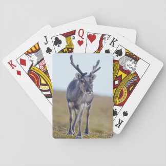 Svalbard reindeer playing cards