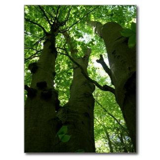 Trees / Wood