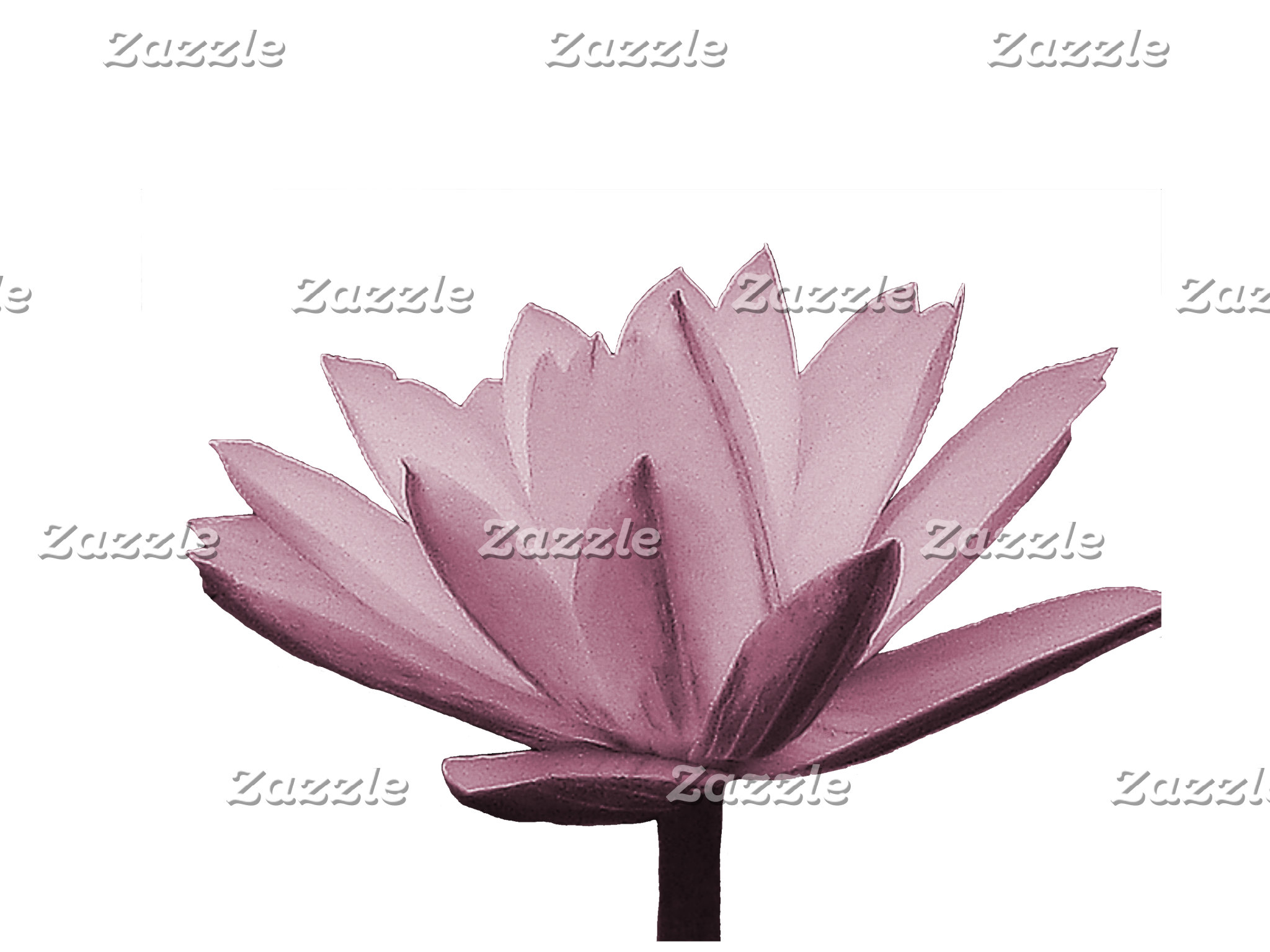 Colorful Water Lily