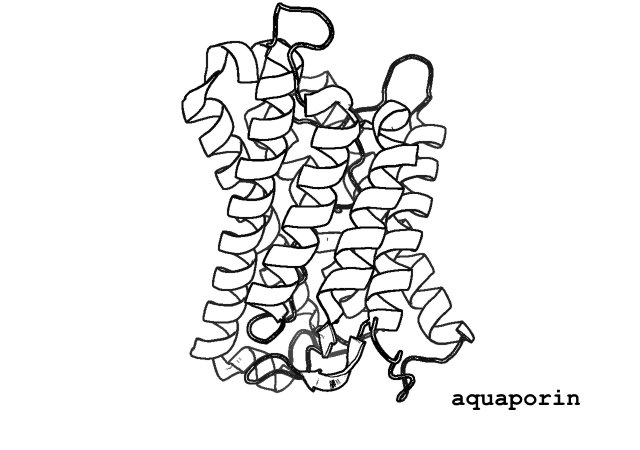 Minimalist protein structure mugs