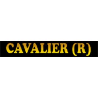 Cavalier King Charles Spaniel - Ruby
