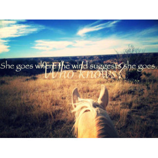 Equine Photography and Quotes