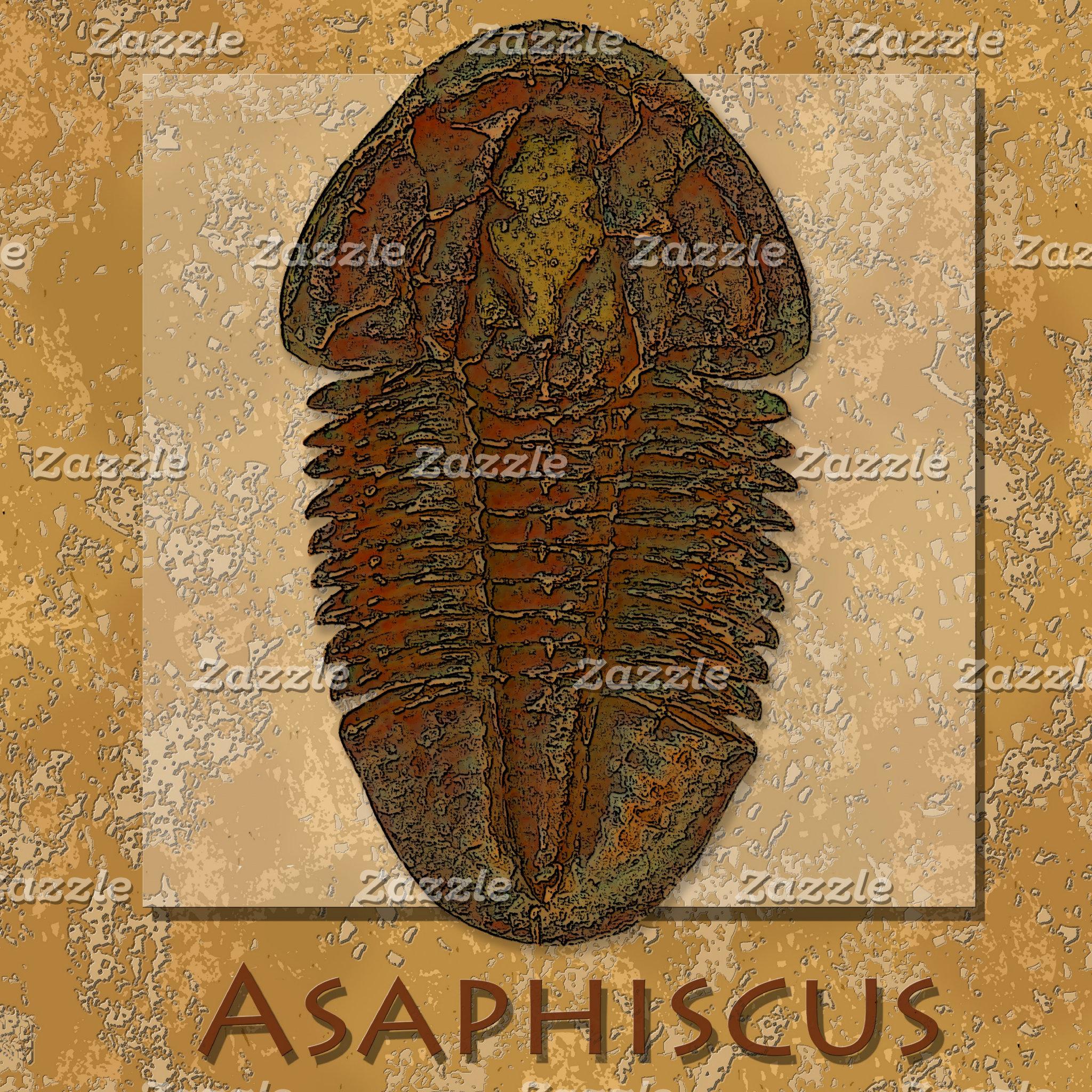 Asaphiscus