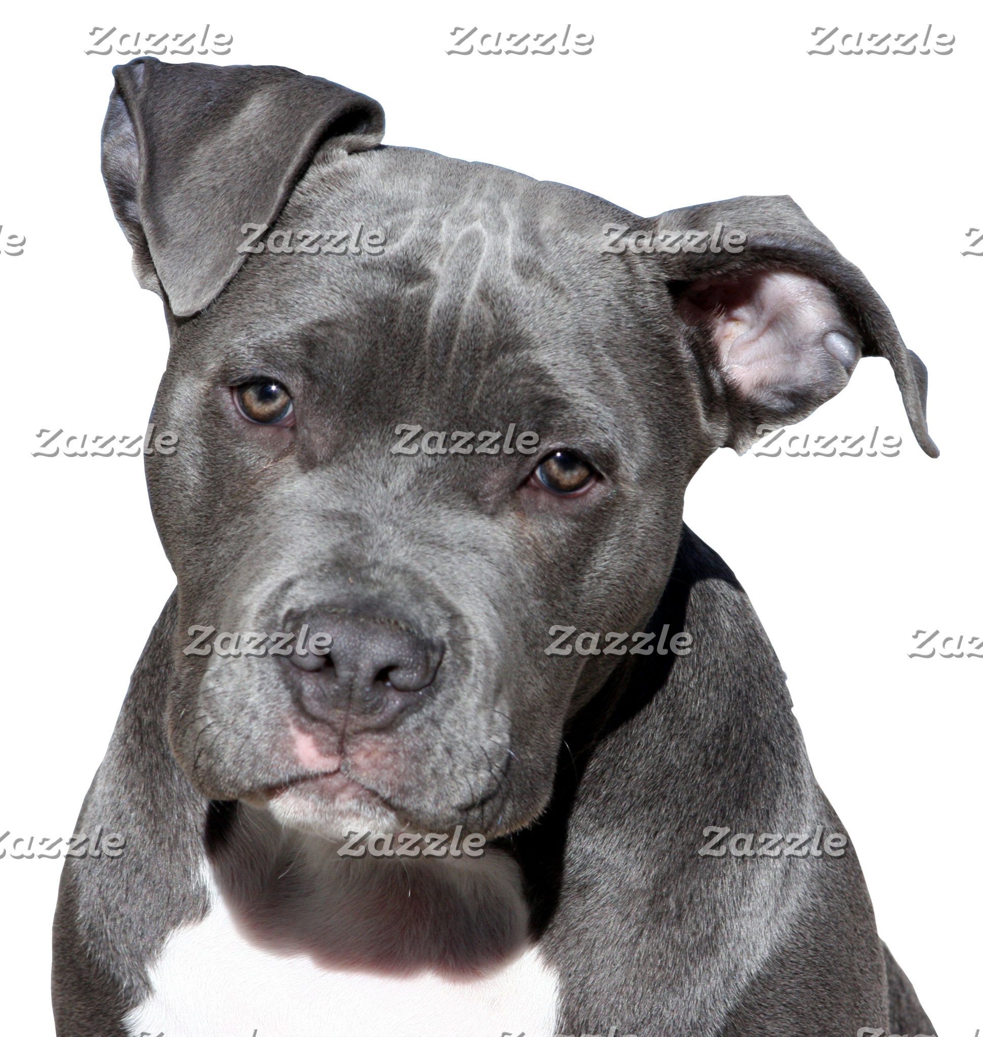 Black Pitbull Design