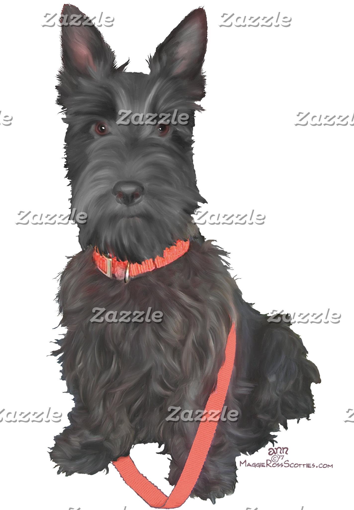Scottish Terrier in Red Collar