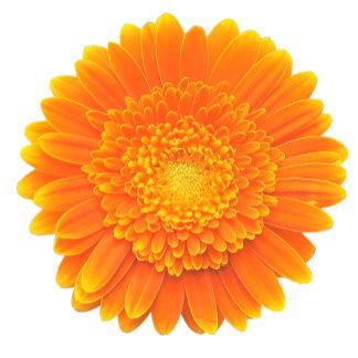 orange petals gerba