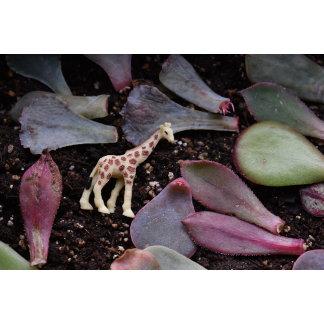Giraffe Garden