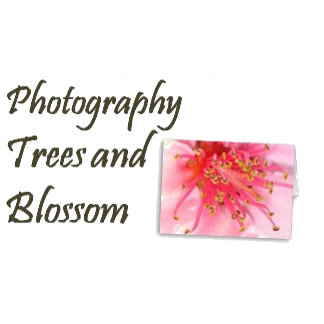 Photography - Trees and Blossom
