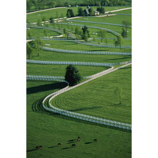 Donamire Farm, Kentucky.