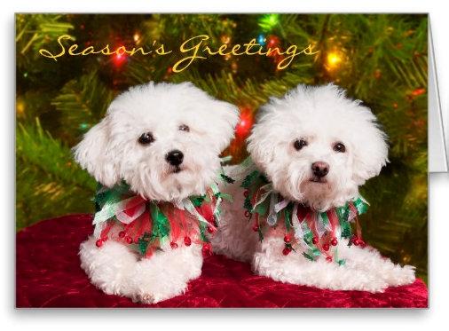 Dog Christmas Cards