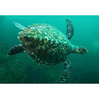 Turtle Items
