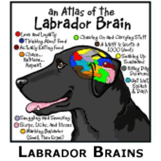 Labrador Brains