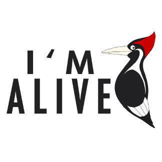 I'm Alive - Ivory Bill Woodpecker