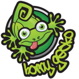 Horny Gecko