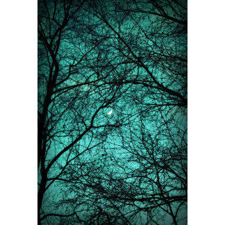 Beautiful Darkness - Half-Moon in the Trees
