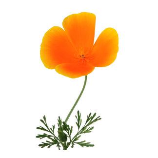 orange poppy design