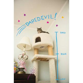 Daredevil Cat