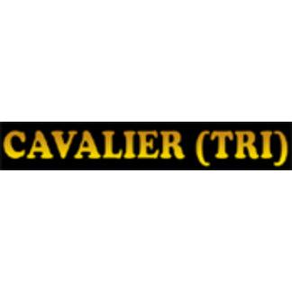 Cavalier King Charles Spaniel - Tri