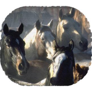 Horses: Wild