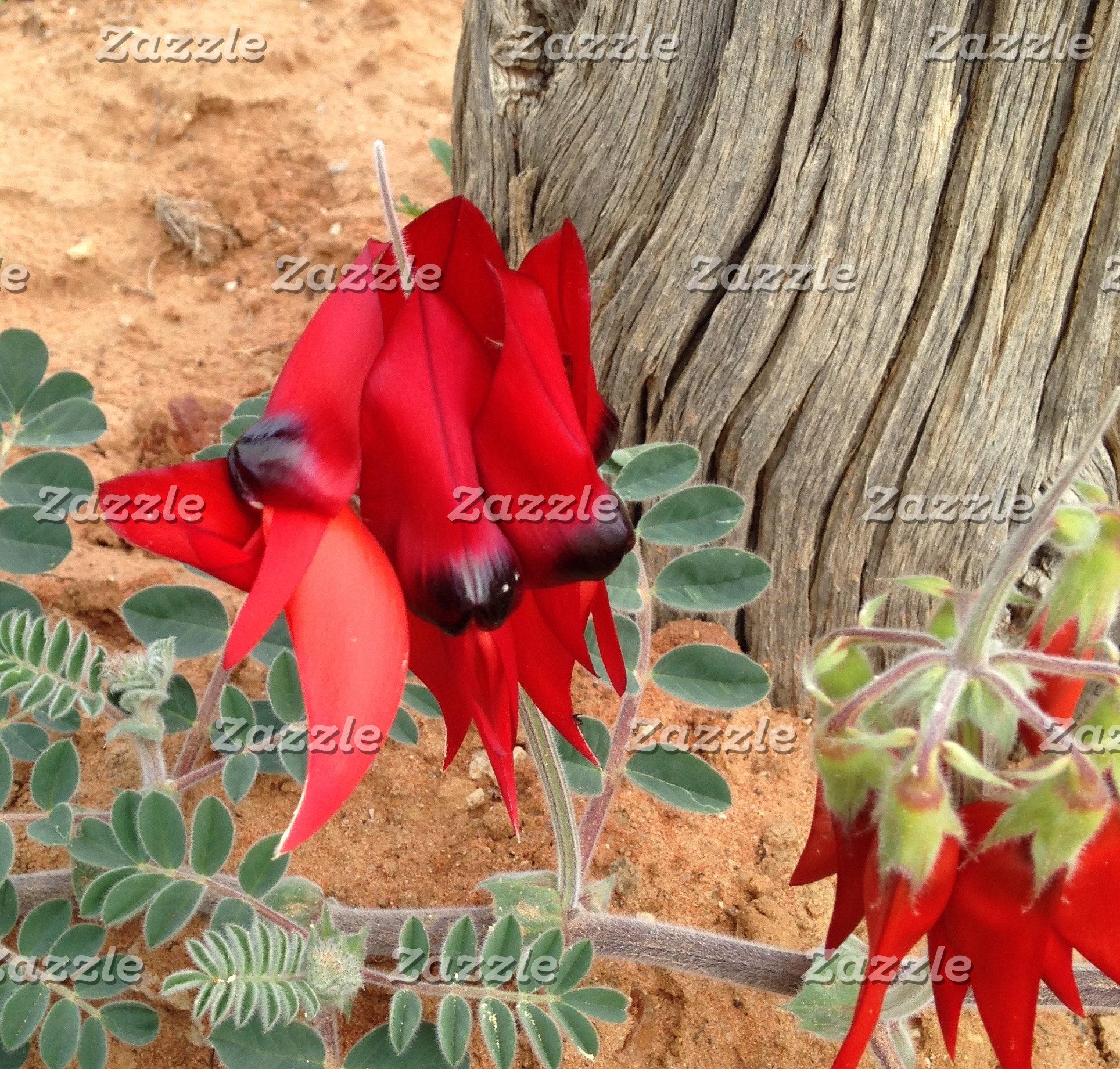 Trees / Plants / Flowers