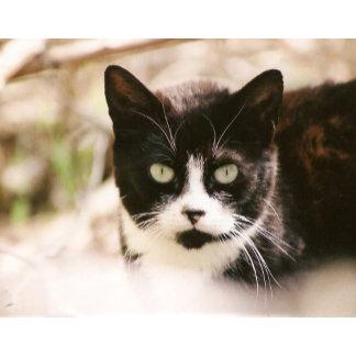 Cat Prints & Posters