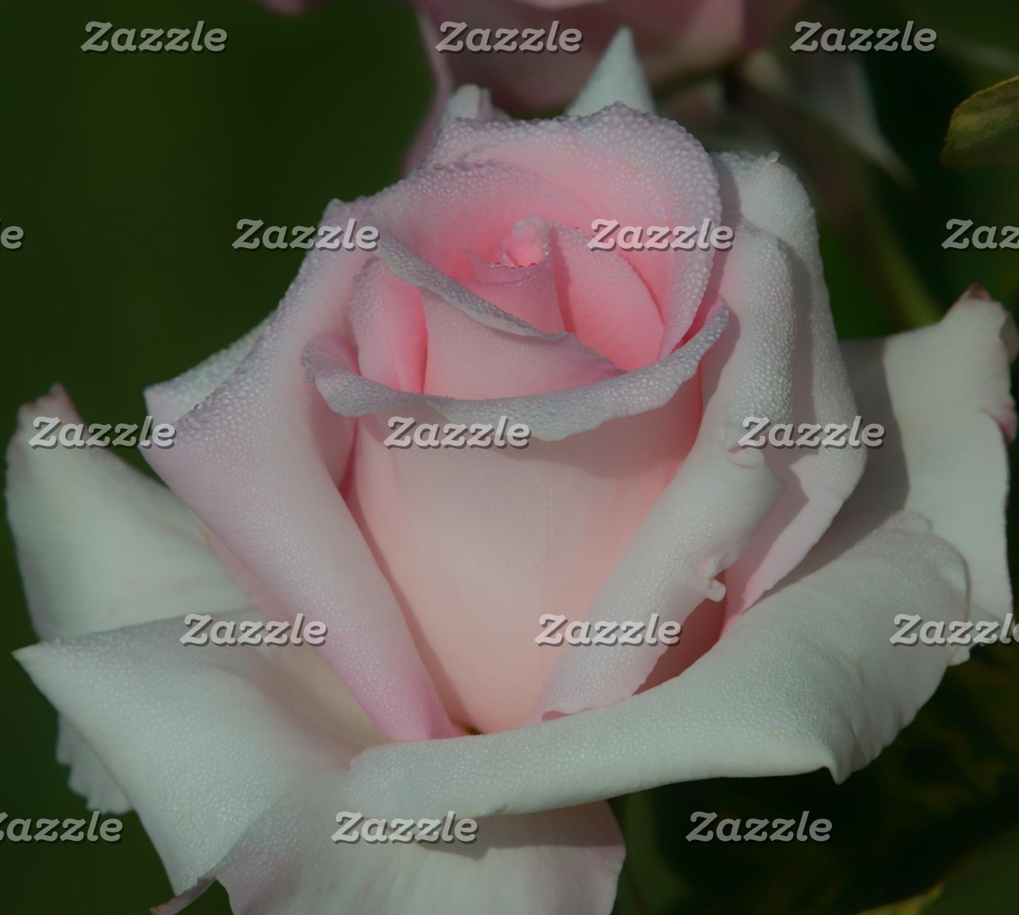 Photo Prints-Roses
