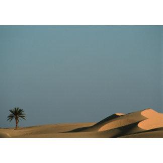 Bahariya Oasis, Egypt.