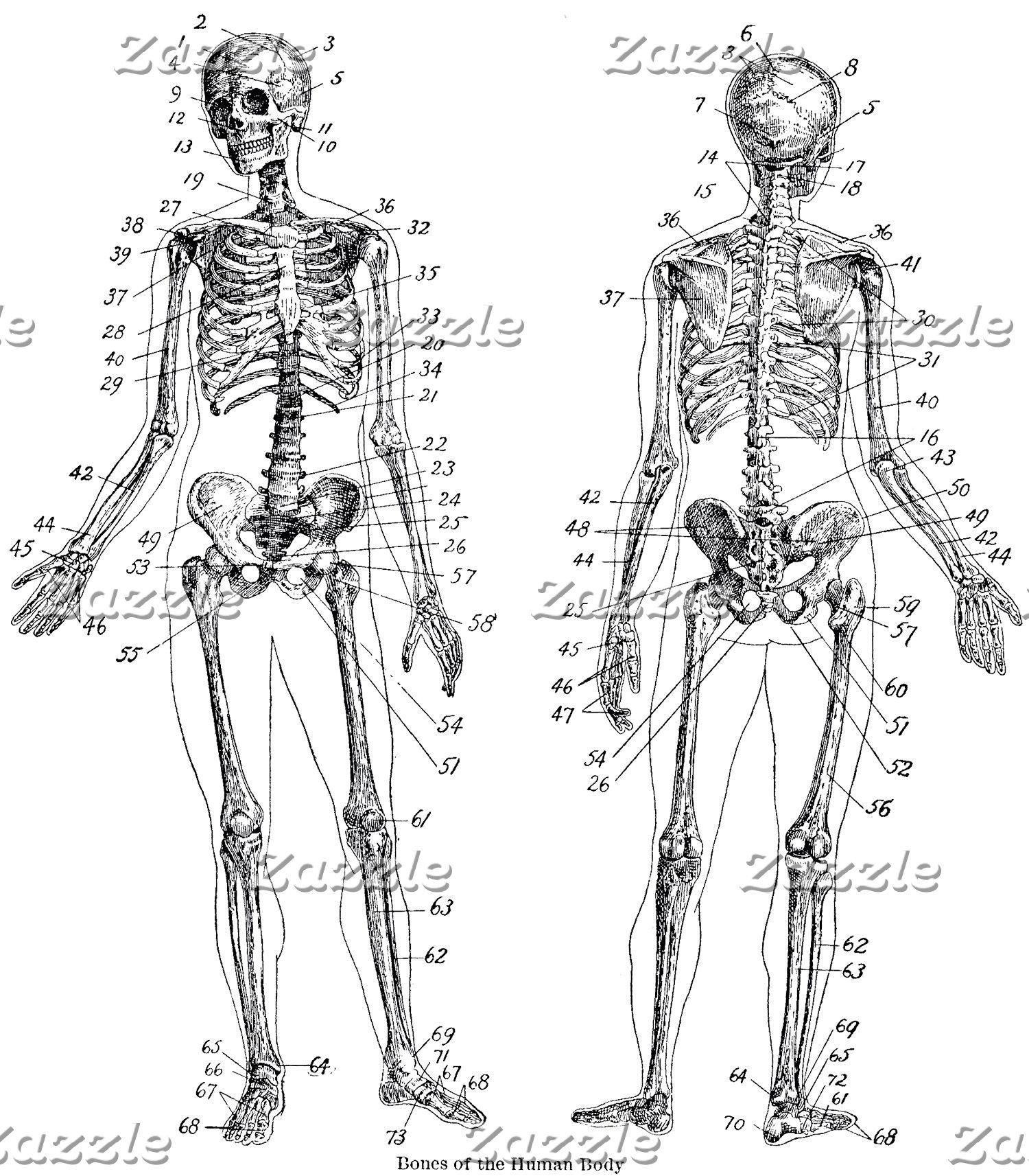 Anatomy!