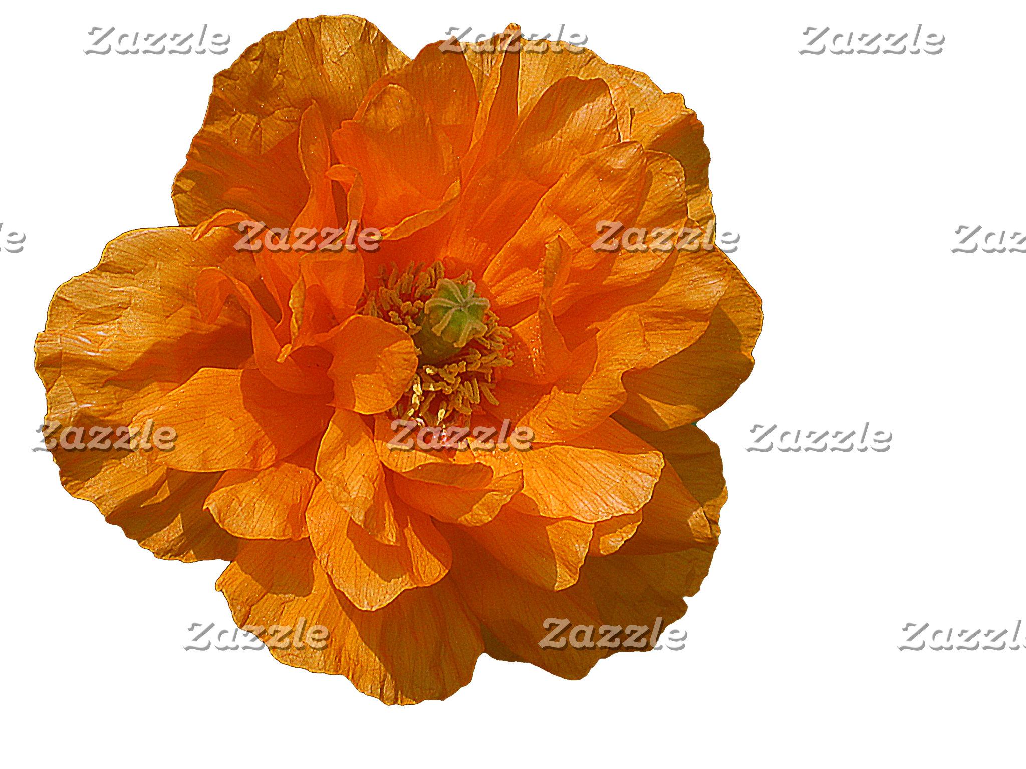 Orange Iceland Poppy
