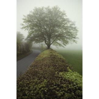 Exmoor, Somerset, England.