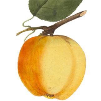 Vintage Apples