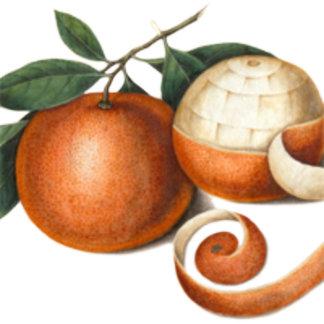 Vintage Oranges