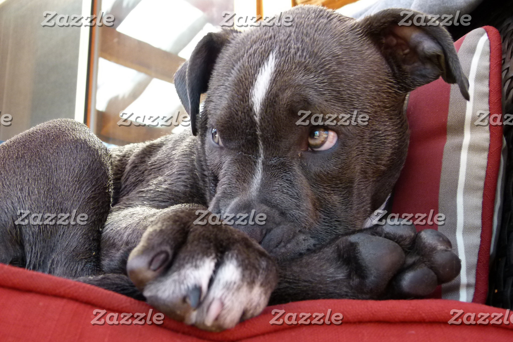 Baby Pitbull Puppy Design