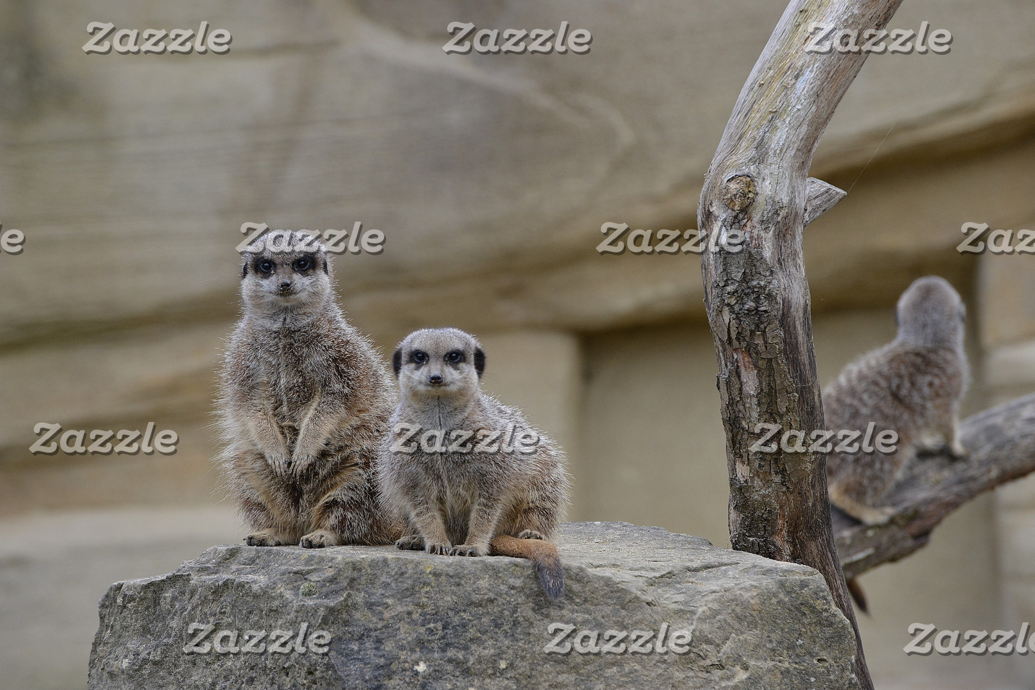 The Meerkats Collection