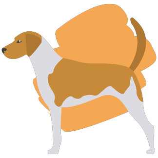American Fox Hound Illustration