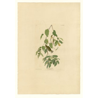 Autumnal Warbler