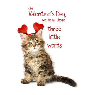 Funny Kitten Valentine
