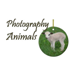 Photography - Animals
