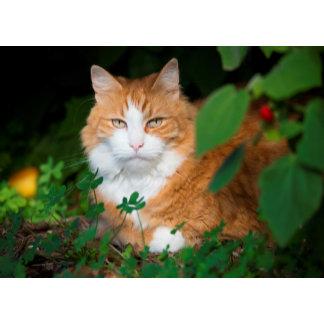 Feline Serenity
