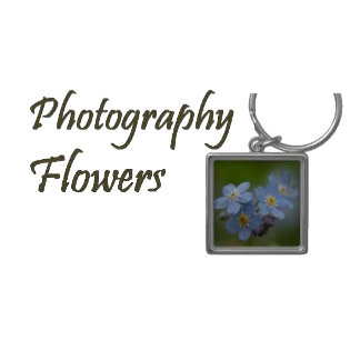Photography - Flowers