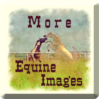 More Equine Images